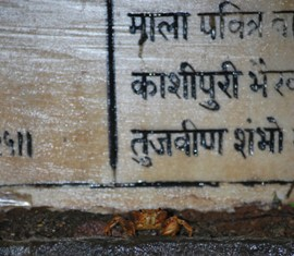a crab reading sanskrit verses as we queue up to enter the sanctum sanctorum
