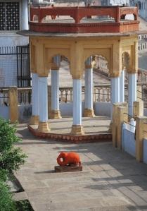 Orange Mouse: vehicle of Lord Ganesha at Ganesha Ghats