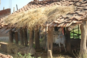Organic homes for cattle