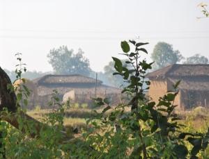 Its the village not luxurious samode safari Lodge