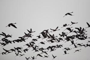 lets fly together