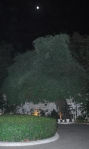 the moonlit driveway