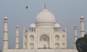 the pigeon and the taj
