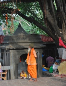 a tree and a sadhu