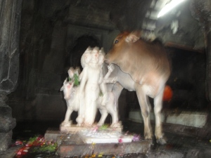 lord krishna and a cow