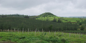 vineyards drape the mountains