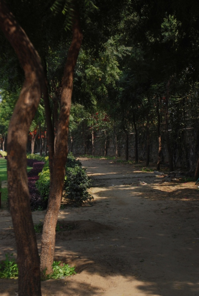 neem lined avenues